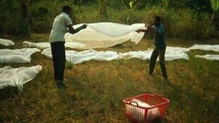 Imprégnation d'une moustiquaire avec une solution de deltamétrine.