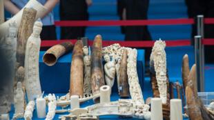 Objets en ivoire de contrebande exposés avant d'être détruits par les autorités chinoises, ici en 2015.