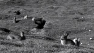 Extrait du documentaire «Les lapins à la berlinoise», du cinéaste polonais Bartosz Kolodko.