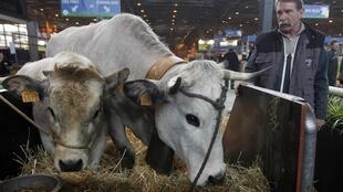 A French farmer stands by his cow Valentine (R) at the the 49th Paris International Farm Show in Paris