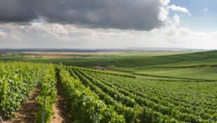 存檔圖片:法國葡萄種植園