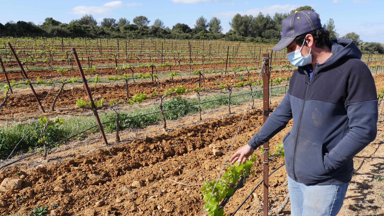 Rémi Dumas, viticulteur, au coeur de ses vignes, le 7 mars 2021.