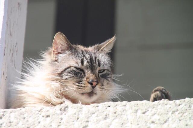 El gato, gran seductor.