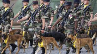Кинологический батальон французской армии (архивное фото)