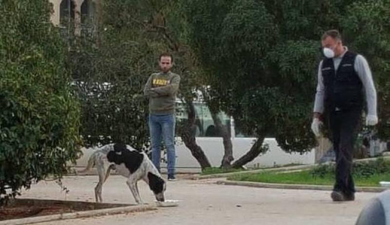 ONG denuncia que outras denúncias de envenenamento de cães foram arquivadas pela Justiça
