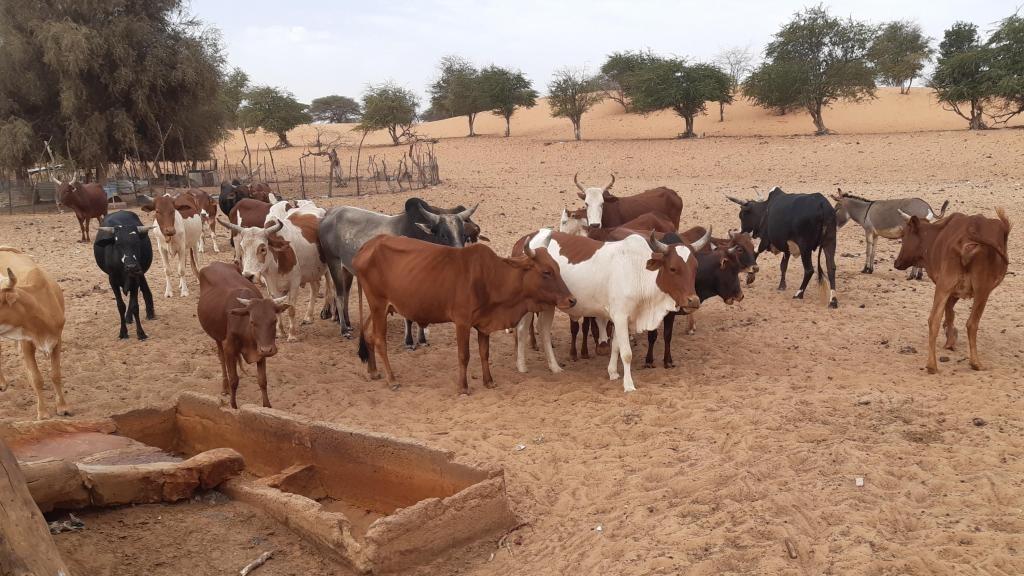 Le puits pastoral du village de Kraa Lahmaar se situe dans le département de Mederdra, qui relève de la région du Trarza, en Mauritanie. Dans cette zone, il faut compter en moyenne 25 kilomètres entre deux points d'eau.