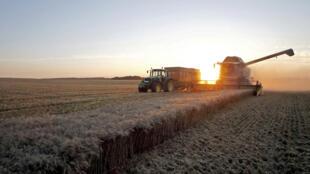 Un champ de blé à Trecault, près de Cambrai dans le Nord de la France.