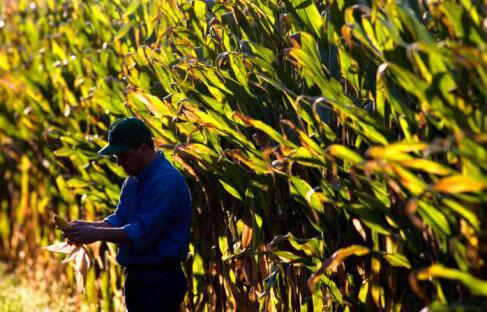 40 % du maïs cultivé aux Etats-Unis est transformé en éthanol.