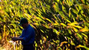 40% du maïs cultivé aux Etats-Unis est transformé en éthanol.