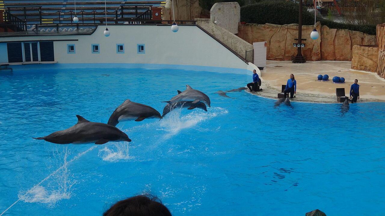 Dolphin show Parc Astérix