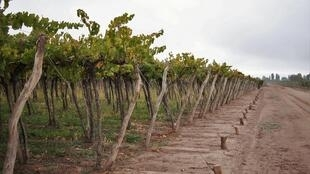 Les Argentins consomment de moins en moins de vin.