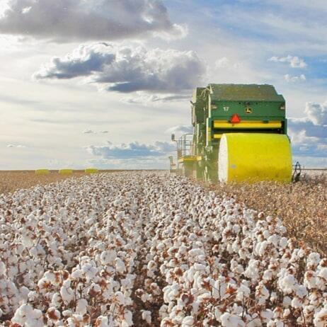 Com 97% da colheita concluída, a Bahia entra na reta final da atual safra de algodão 2018/2019.