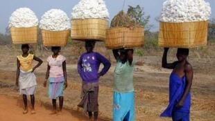 Une des priorités des agriculteurs est d'améliorer la réputation du coton africain.