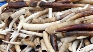 Na semana passada, a Françca destruiu cerca de três toneladas de marfim ilegal.