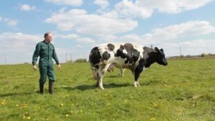 Un fermier et sa vache. Le premier est-il supérieur à la seconde? C'est la provocante question posée depuis près de 40 ans par les tenants de l'antispécisme.