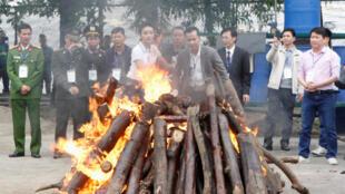 Tiêu hủy ngà voi và sừng tê giác tại Hà Nội, ngày 12/11/2016.