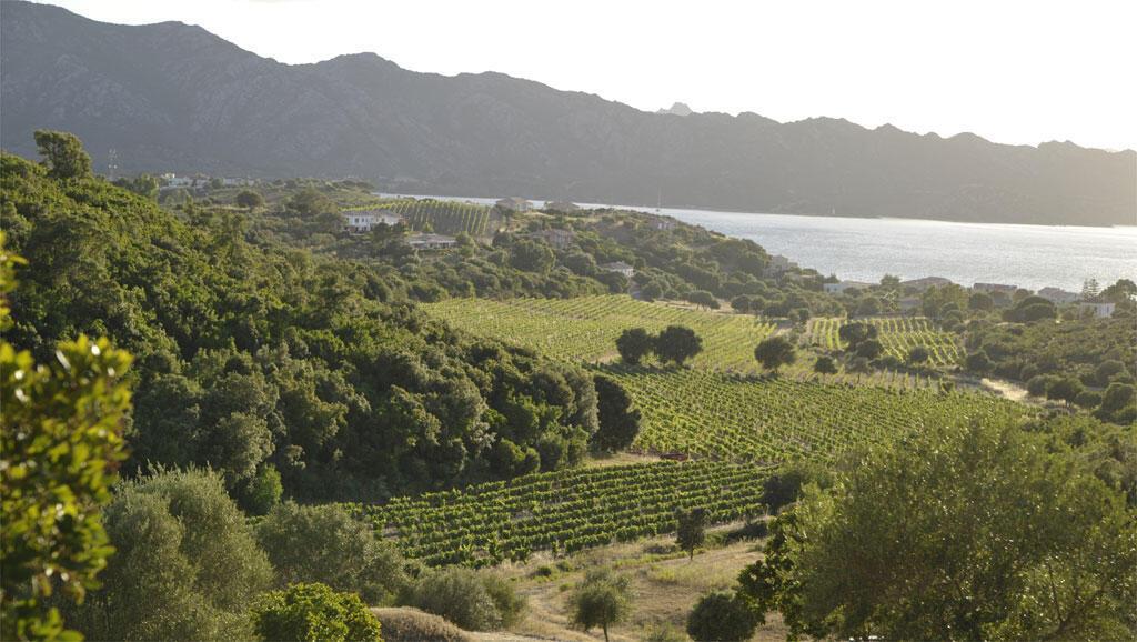 Le vignoble du Clos de Bernardi à Patrimonio en Corse.