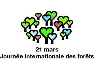 """3月21日周一是聯合國推出的""""國際森林日"""""""