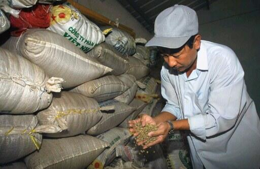 Le café se fait rare dans les ports vietnamiens. Photo d'un agriculteur qui contrôle sa production de robusta, dans la province du Dong Nai, dans le sud du Vietnam.