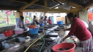 Au lavoir d'Amparibe, la plupart des lavandières cumulent les petits boulots pour survivre et nourrir leurs familles