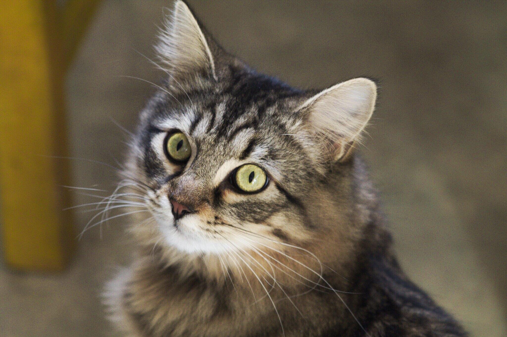 Más allá de todo, los gatos saben demostrar su cariño.