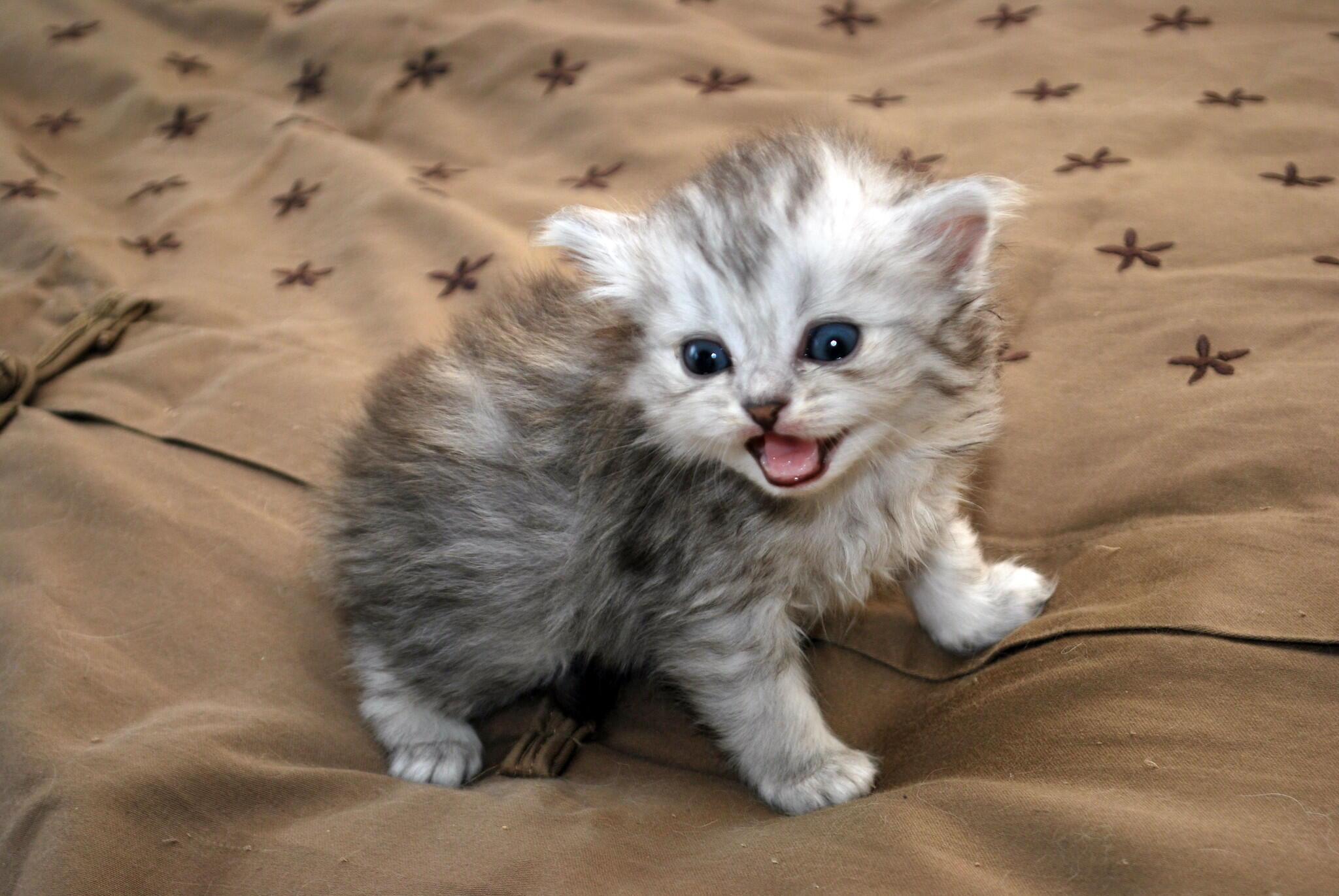 Quizás los felinos no estén conscientes de que se trata de su nombre, pero reaccionan cuando escuchan un sonido habitual.