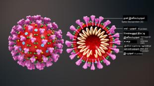 """Mô hình virus corona. Hình bông hoa màu tím chìa ra ngoài quả cầu là các protein Spike, được coi là các """"chìa khóa"""" cho phép virus gây bệnh Covid xâm nhập vào các tế bào người."""