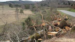 Árvores cortadas em Corrèze