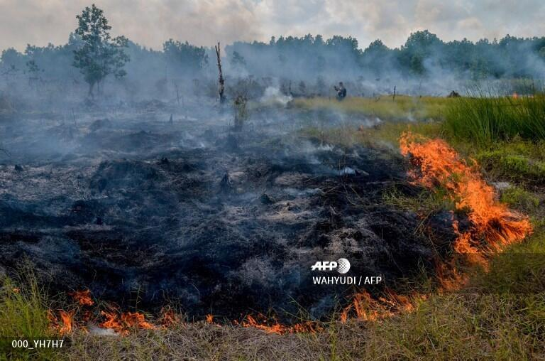 Đốt rừng để lấy đất trồng cọ tại Indonesia. Ảnh chụp tại tỉnh Rieu, ngày 1/2/2018.