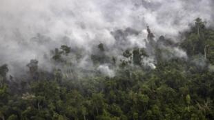 Nạn cháy rừng Indonesia làm xáo trộn ngành hàng không Malaysia, Thái Lan và Philippines - REUTERS /Regina Safri