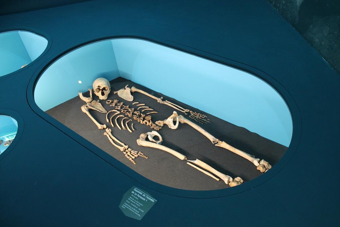 Squelette découvert à La Ferrassie (Dordogne) au début du XXe siècle.