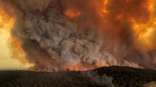 Au moins 4000 bovins ont été tués par les feux ou ont dû être abattus.