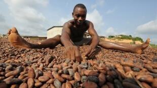 Un ouvrier travaillant dans une coopérative d'exportation de cacao à Moussadougou, un village de San Pedro.