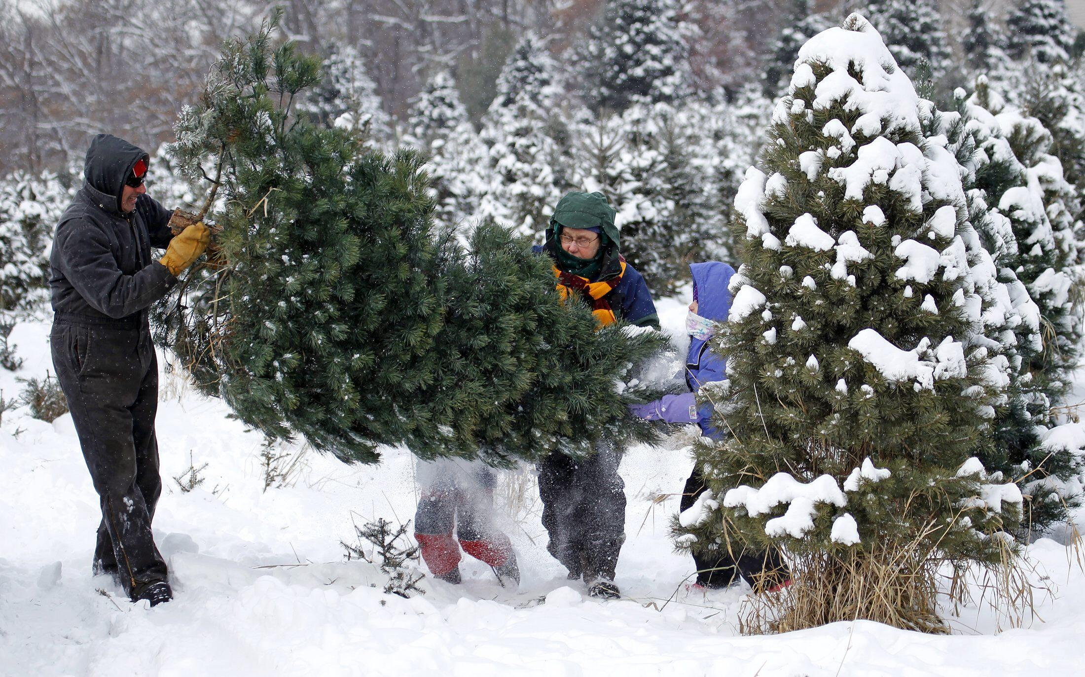 Os clientes podem encomendar seus pinheiros pela Internet, no site: www. treezmas.com.