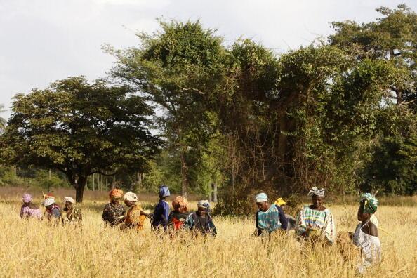 Au Sénégal, près d'un million d'arbres ont été plantés. (photo d'illustration)