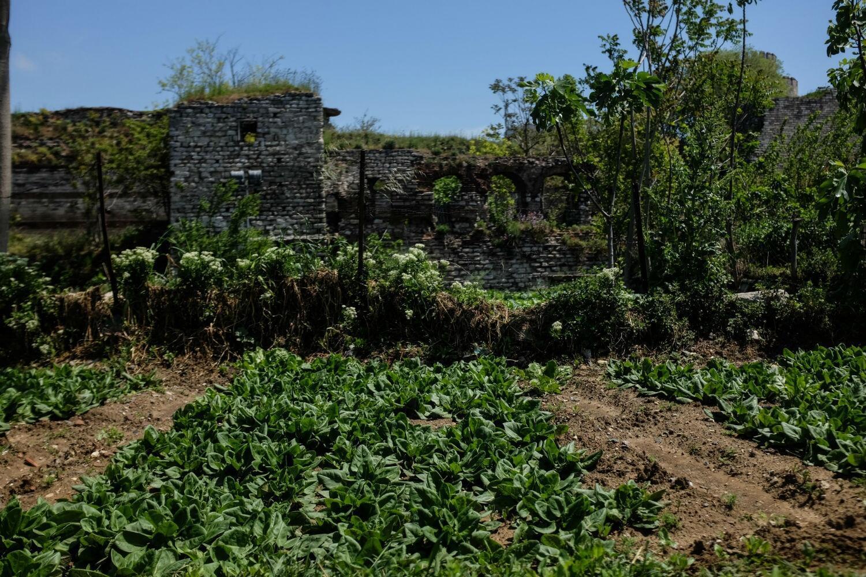 Plantés au pied de l'ancienne muraille de Constantinople, les potagers millénaires ont, pour le moment, survécu par miracle à l'urbanisation forcenée d'Istanbul.