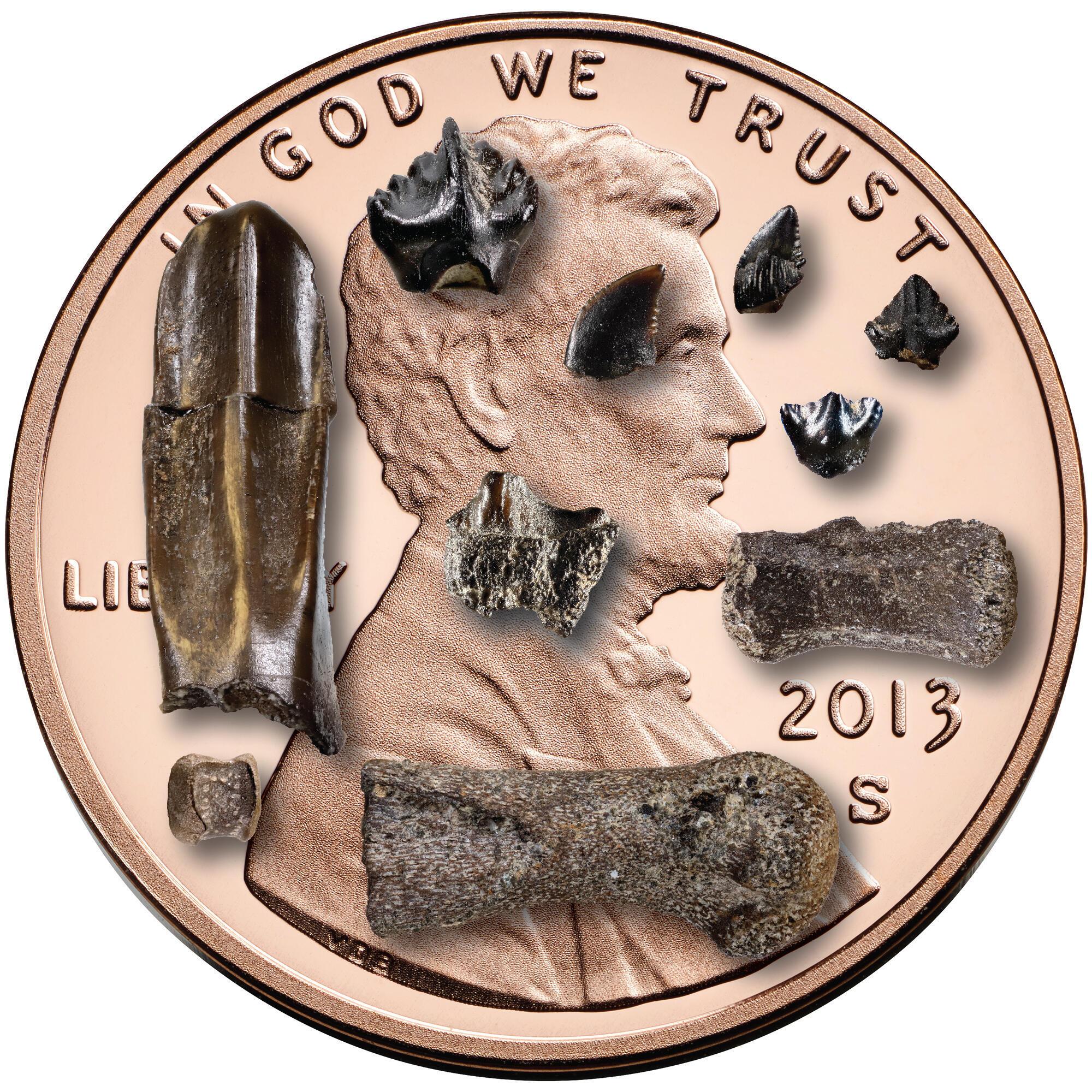 Huesos y dientes de dinosaurio bebé de la formación Prince Creek, en el norte de Alaska, frente a un centavo estadounidense