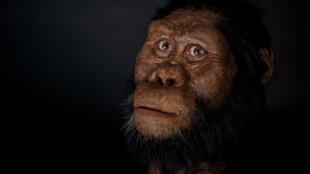 Reconstituição da cara de um Australopitecus anamensis pelo Museu de História Natural de Cleveland, graças à descoberta, na  Etiópia, de um crânio que data de 3,8 milhões de anos.
