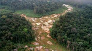 Une vue de la forêt tropicale amazonienne, partiellement abattue.
