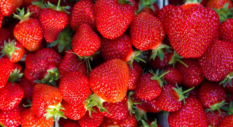 草莓是一種精緻的水果,收割時需要照顧。