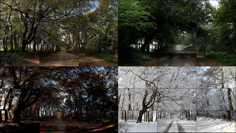 """""""The Fours Seasons, Woldgate Woods"""", 2010-2011, 36 vidéos, nouveaux médias, 205,70 x 364,40 cm. Durée : 4:21."""