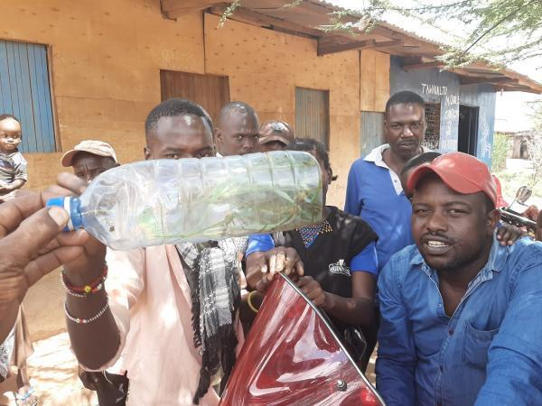 Wakazi wa Eneo la Isiolo kaskazini mwa Nairobi washikilia chupa lililojaa nzige waharibifu.