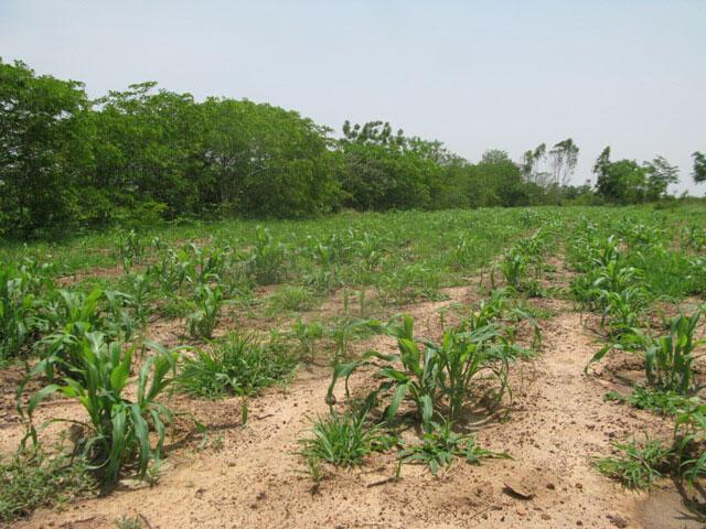 Terre restaurée pour l'agriculture.
