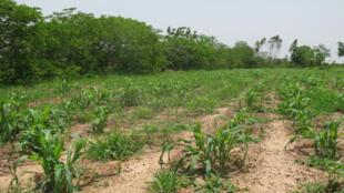 Tierra restaurada para la agricultura.
