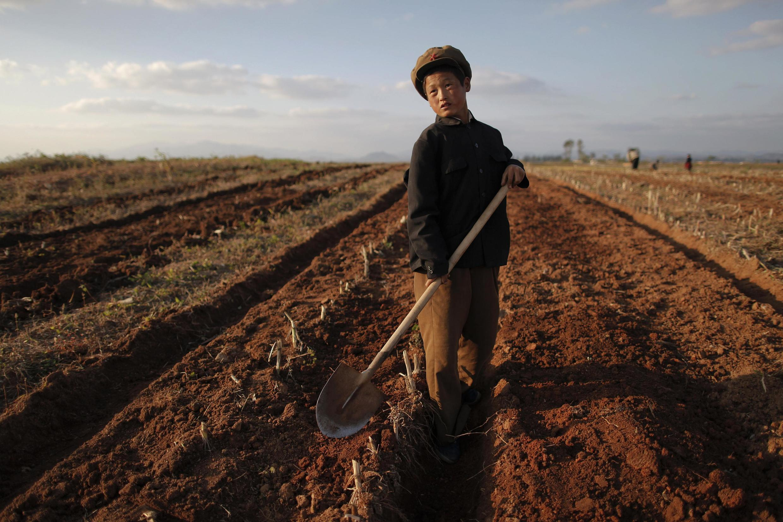 Bình Nhưỡng đóng cửa trường học, bắt học sinh kể cả cấp một đi làm ruộng (REUTERS /D. Sagolj)