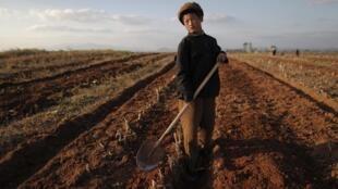 Um relatório da FAO publicado hoje alerta para a degradação das terras cultiváveis em todo o planeta.