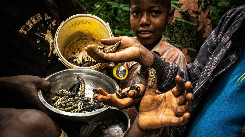 Centrafrique - chenilles - enfants du village de Mokinda