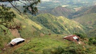 La finca, la propriété de Don Hernando dans les hauteurs de Honda, dans le Huila, au sud de la Colombie. C'est ici que poussent désormais haricots rouges, maïs, café et fruits locaux.