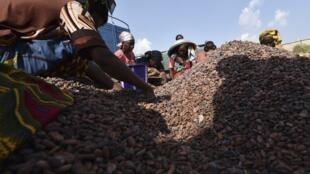 Des Ivoiriens travaillant dans un centre de tri de cacao.