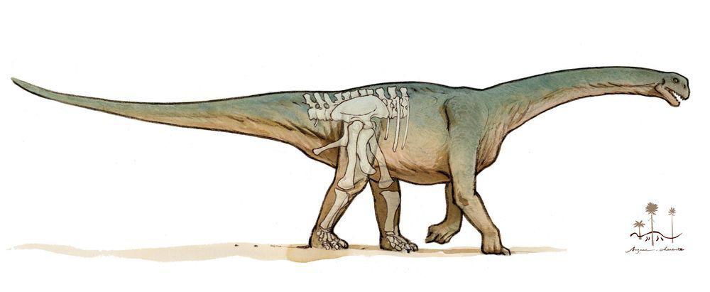 Ilustración del dibujante Mazan de un saurópodo, dinosaurio gigante herbívoro. Se puede ver el fémur y la tibia.